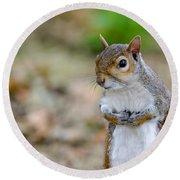 Standing Squirrel Round Beach Towel by Matt Malloy