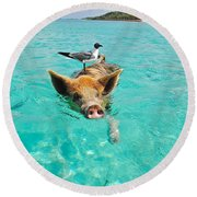 Staniel Cay Swimming Pig Seagull Fish Exumas Round Beach Towel