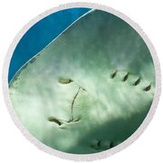 Round Beach Towel featuring the photograph Stingray Face by Eti Reid