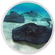 Stingrays Round Beach Towel