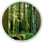 Stout Grove Coastal Redwoods Round Beach Towel by Ed  Riche