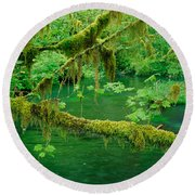 Stream Flowing Through A Rainforest Round Beach Towel by Panoramic Images