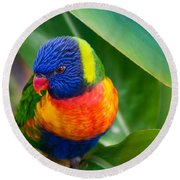 Striking Rainbow Lorakeet Round Beach Towel