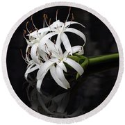 Round Beach Towel featuring the photograph String Lily #1 by Paul Rebmann