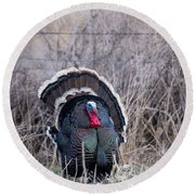 Round Beach Towel featuring the photograph Strutting Turkey by Michael Chatt