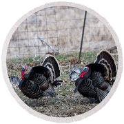 Round Beach Towel featuring the photograph Strutting Turkeys by Michael Chatt
