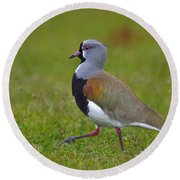 Strutting Lapwing Round Beach Towel by Tony Beck