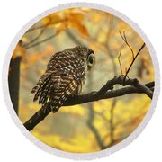 Stubborn Owl Round Beach Towel by Debbie Green