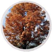 Sugar Maple In Autumn Round Beach Towel
