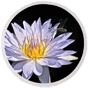 Summer Magic -- Dragonfly On Waterlily On Black Round Beach Towel
