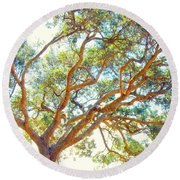 Round Beach Towel featuring the photograph Summertime Tree by Jocelyn Friis