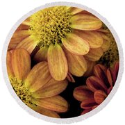 Round Beach Towel featuring the photograph Sun Fans by Jean OKeeffe Macro Abundance Art