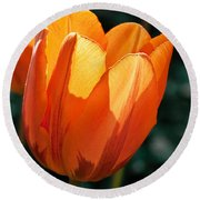 Round Beach Towel featuring the photograph Sun Kissed Tulip by Barbara McMahon