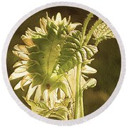 Round Beach Towel featuring the photograph Sun-lite Sunflowwer by Donna Brown