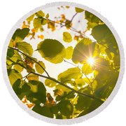 Round Beach Towel featuring the photograph Sun Shining Through Leaves by Chevy Fleet