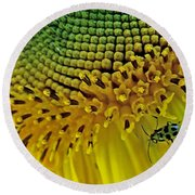Sunflower And Beetle Round Beach Towel