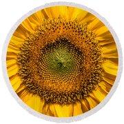 Sunflower Closeup Round Beach Towel by Carsten Reisinger