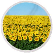 Sunflower Field, North Dakota, Usa Round Beach Towel