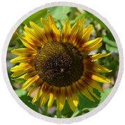 Sunflower Glory Round Beach Towel