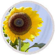 Round Beach Towel featuring the photograph Sunflower In The Blue Sky by David Millenheft