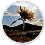 Round Beach Towel featuring the photograph Sunflower In The Sun by Matt Harang