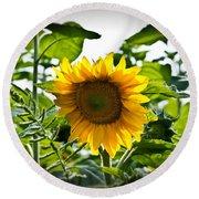 Sunflower Vignette Edges Round Beach Towel