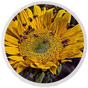 Sunflower With Ladybugs Round Beach Towel