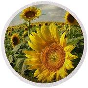 Kansas Sunflowers Round Beach Towel by Chris Berry