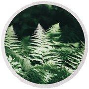 Round Beach Towel featuring the photograph Sunlight And Shadows-algonquin Ferns by David Porteus