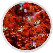 Sunlit Japanese Maple Round Beach Towel