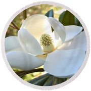 Sunlit Southern Magnolia Round Beach Towel