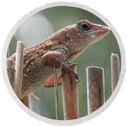 Sunning Lizard Round Beach Towel by Belinda Lee