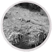 Round Beach Towel featuring the photograph Sunny Gator Black And White by Joseph Baril