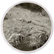 Round Beach Towel featuring the photograph Sunny Gator Sepia  by Joseph Baril