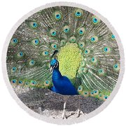 Round Beach Towel featuring the photograph Sunny Peancock by Caryl J Bohn