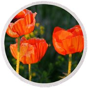 Round Beach Towel featuring the photograph Sunset Poppies by Debbie Oppermann