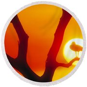 Sunset With Egyptian Goose Round Beach Towel