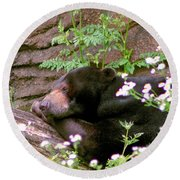 Round Beach Towel featuring the photograph Sunshine Bear by Adam Olsen
