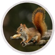 Round Beach Towel featuring the photograph Surprised Red Squirrel With Nut Portrait by Debbie Oppermann