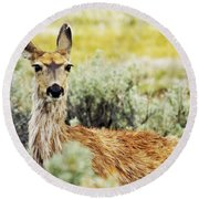 Round Beach Towel featuring the photograph Surround Sound by Belinda Greb
