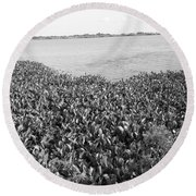 Round Beach Towel featuring the photograph Swamp Hyacinths Water Lillies Black And White by Joseph Baril