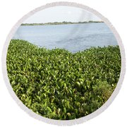 Round Beach Towel featuring the photograph Swamp Hyacinths Water Lillies by Joseph Baril