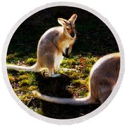 Red-necked Wallabies Round Beach Towel