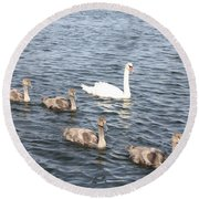 Swan And His Ducklings Round Beach Towel by John Telfer