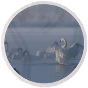 Round Beach Towel featuring the photograph Swan Showing Off by Patti Deters