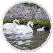 Swans And Cygnets In Brugge Canal Belgium Round Beach Towel