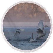 Round Beach Towel featuring the photograph Swans Chasing by Patti Deters