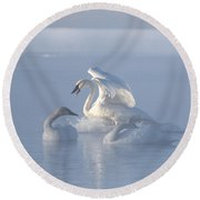 Round Beach Towel featuring the photograph Trumpeter Swans - Three's Company by Patti Deters