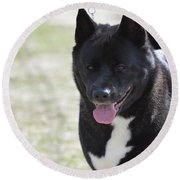 Sweet Akita Dog Round Beach Towel by DejaVu Designs