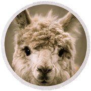 Sweet Alpaca Round Beach Towel